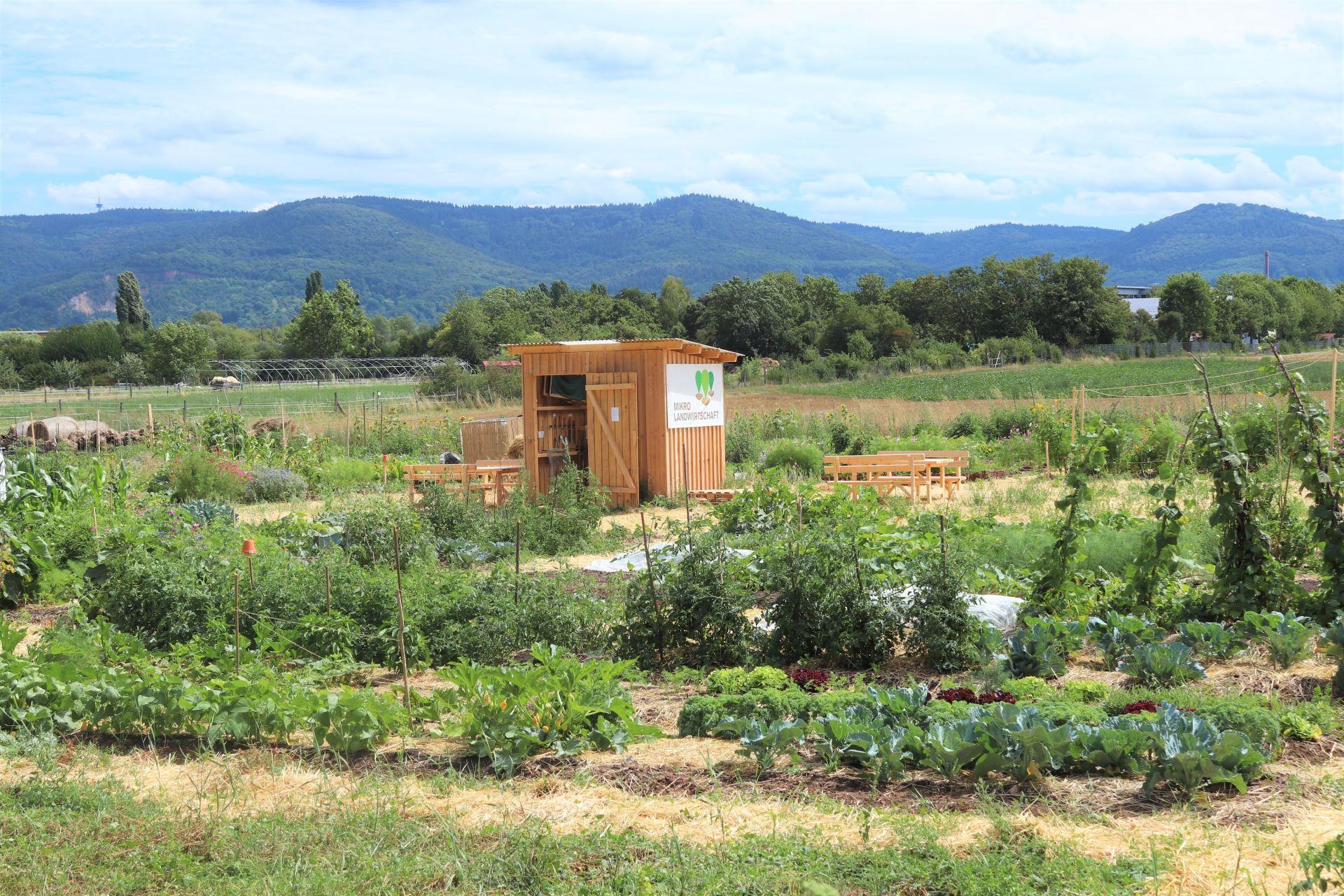 Mikro Landwirtschaft - die Plattform für gemeinschaftlichen Gemüseanbau');